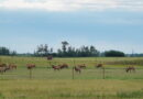 Edmonton Really Has Elk Within Vicinity